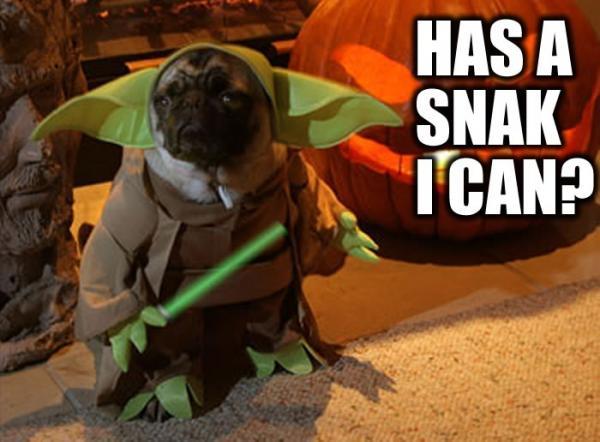 Yoda Pug. .. omg this is so gay Yoda Dogs