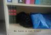 <b>cats</b> -.-