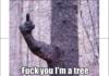 Fuck You I'm a Tree