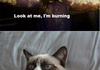 I love grumpy cat and Silent Hill
