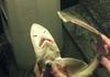 impossibru lvl shark