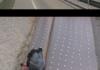 BRIDGE > PIGEON