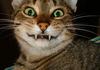 oohhhhh Kitties!