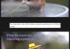 Hamster Gondola