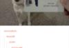 This dog has a job
