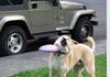 Like if ur against animal abuse >:(