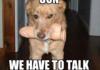 Dog oc