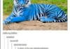 New tiger!
