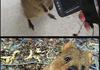 Super Photogenic Rodent Rod
